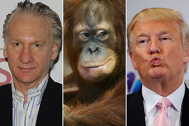 Bill Maher Donald Trump orangutan